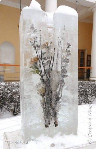 Необычная выставка цветов  прошла в дни новогодних праздников в Павловском парке под Петербургом фото 13