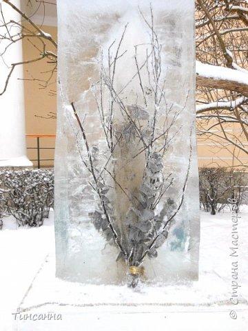 Необычная выставка цветов  прошла в дни новогодних праздников в Павловском парке под Петербургом фото 15