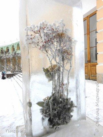 Необычная выставка цветов  прошла в дни новогодних праздников в Павловском парке под Петербургом фото 4