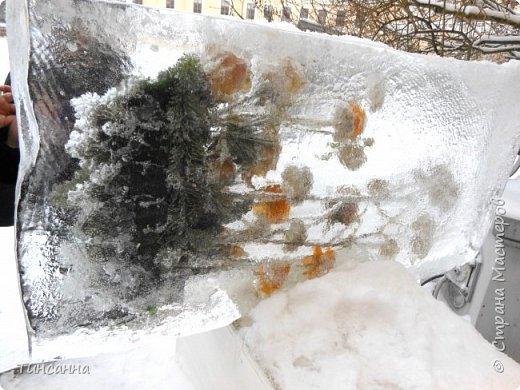 Необычная выставка цветов  прошла в дни новогодних праздников в Павловском парке под Петербургом фото 9