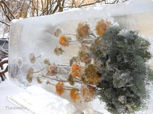 Необычная выставка цветов  прошла в дни новогодних праздников в Павловском парке под Петербургом фото 10