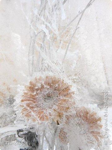 Необычная выставка цветов  прошла в дни новогодних праздников в Павловском парке под Петербургом фото 20