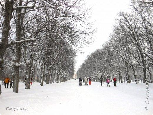 Необычная выставка цветов  прошла в дни новогодних праздников в Павловском парке под Петербургом фото 23