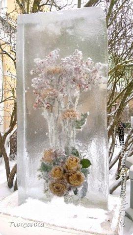 Необычная выставка цветов  прошла в дни новогодних праздников в Павловском парке под Петербургом фото 3
