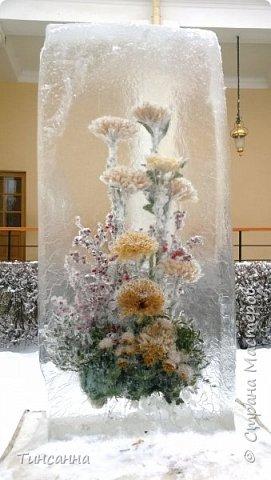Необычная выставка цветов  прошла в дни новогодних праздников в Павловском парке под Петербургом фото 16