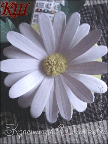 Маргарита-ромашка фото 1