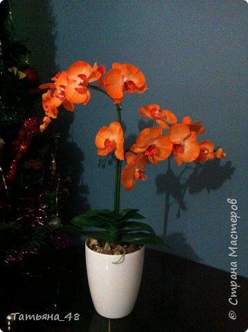 Привет Страна! Поздравляю всех Татьян с нашим днем..... Вот как и обещала снова я и снова с орхидеей, на этот раз с фантазийной..... Учла предыдущие коментария и сделала середку поярче. Цвет для такого вида орхидеи конечно в природе не существует, но заказщице и мне нравится. Настроение поднимается глядя на цветок..... фото 2