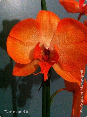 Привет Страна! Поздравляю всех Татьян с нашим днем..... Вот как и обещала снова я и снова с орхидеей, на этот раз с фантазийной..... Учла предыдущие коментария и сделала середку поярче. Цвет для такого вида орхидеи конечно в природе не существует, но заказщице и мне нравится. Настроение поднимается глядя на цветок..... фото 1
