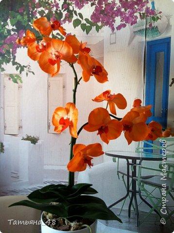 Привет Страна! Поздравляю всех Татьян с нашим днем..... Вот как и обещала снова я и снова с орхидеей, на этот раз с фантазийной..... Учла предыдущие коментария и сделала середку поярче. Цвет для такого вида орхидеи конечно в природе не существует, но заказщице и мне нравится. Настроение поднимается глядя на цветок..... фото 6