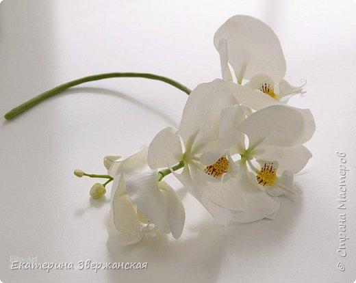 Орхидеи фаленопсис из холодного фарфора фото 3