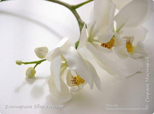 Орхидеи фаленопсис из холодного фарфора фото 1