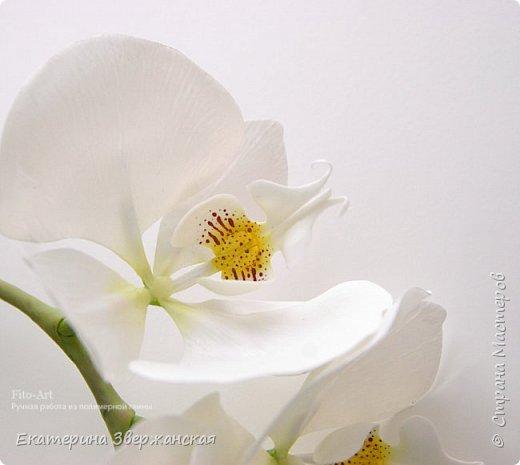 Орхидеи фаленопсис из холодного фарфора фото 5