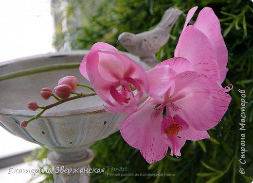 Орхидеи фаленопсис из холодного фарфора фото 8