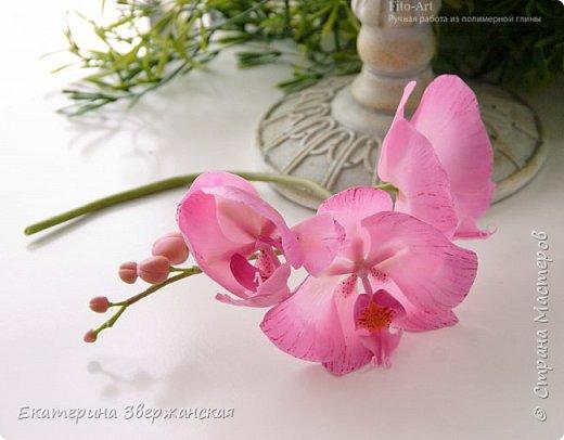 Орхидеи фаленопсис из холодного фарфора фото 9