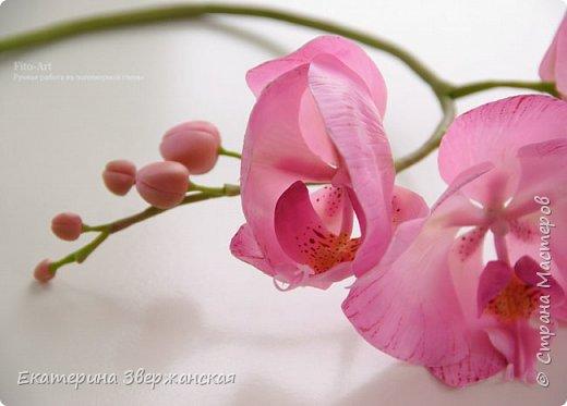 Орхидеи фаленопсис из холодного фарфора фото 11