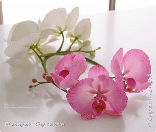 Орхидеи фаленопсис из холодного фарфора фото 14