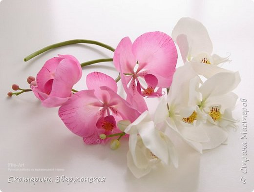 Орхидеи фаленопсис из холодного фарфора фото 15