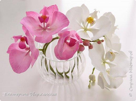 Орхидеи фаленопсис из холодного фарфора фото 19