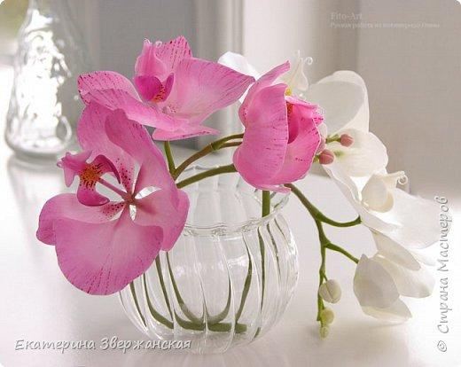 Орхидеи фаленопсис из холодного фарфора фото 20