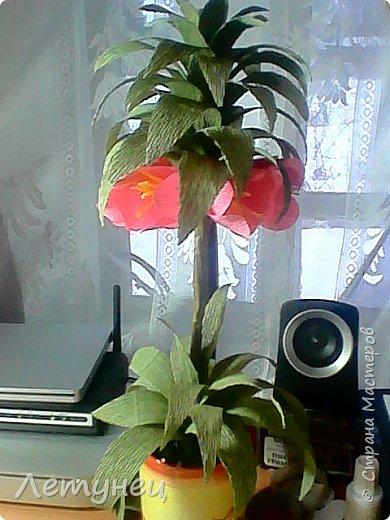 Здравствуйте дорогие мастера и мастерицы ,знаю что не изобрела ничего нового но  на просторах интернета очень понравились цветы и я решила попробовать и вот что получилось,конечно не всё ровно да гладко ,но для первого раза  ничего.Конечно как я делала я не догадалась заснять ,так была увлечена,так что перед вами готовые работы. фото 1