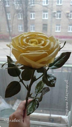 Моя первая роза из хф  фото 5