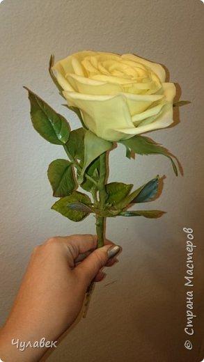 Моя первая роза из хф  фото 4
