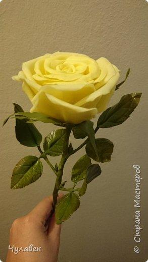 Моя первая роза из хф  фото 1