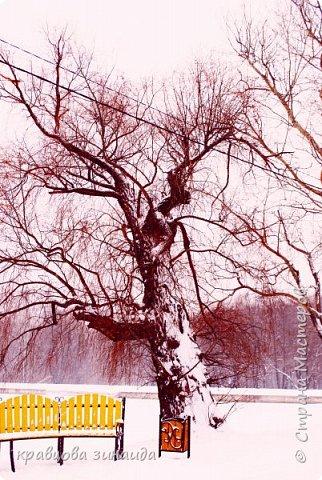 ДОБРЫЙ ДЕНЬ , решила погулять по моему любимому парку , был сильнейший снегопад и пасмурно , но меня понесло,  погуляла  , пофотографировала,  посмотрела на снимки и решила их как то оживить , надо когда - то учиться и работать в фотошопе! и стала редактировать , изменила освещенность, контрастность  цвет , тени , ну и т. д. и получились вот такие фото.   фото 4