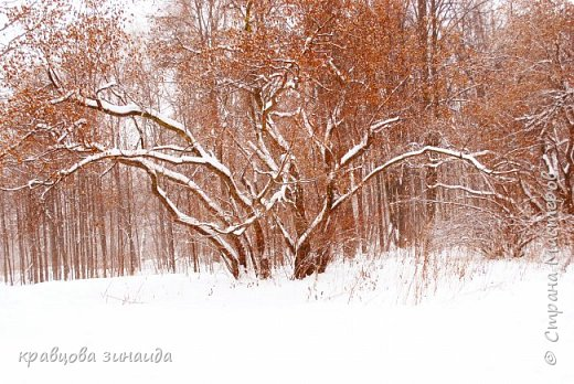 ДОБРЫЙ ДЕНЬ , решила погулять по моему любимому парку , был сильнейший снегопад и пасмурно , но меня понесло,  погуляла  , пофотографировала,  посмотрела на снимки и решила их как то оживить , надо когда - то учиться и работать в фотошопе! и стала редактировать , изменила освещенность, контрастность  цвет , тени , ну и т. д. и получились вот такие фото.   фото 16