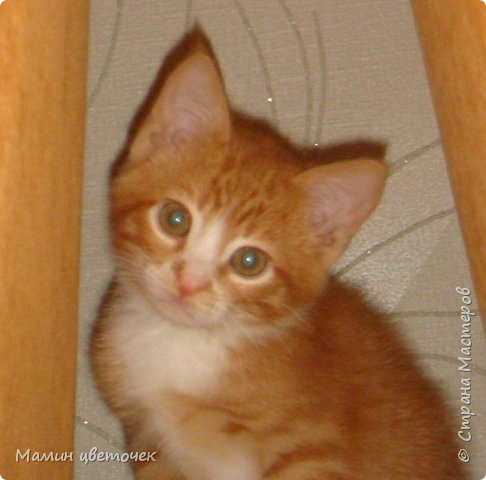 Всем привет!Недавно я писала о своем котике Рыжике. Сегодняшняя запись в блоге о том, как наш котик у нас прижился. фото 1