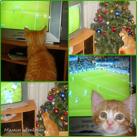 Всем привет!Недавно я писала о своем котике Рыжике. Сегодняшняя запись в блоге о том, как наш котик у нас прижился. фото 5