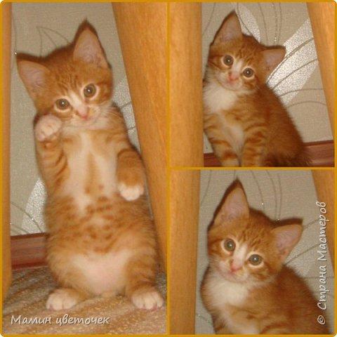 Всем привет!Недавно я писала о своем котике Рыжике. Сегодняшняя запись в блоге о том, как наш котик у нас прижился. фото 4