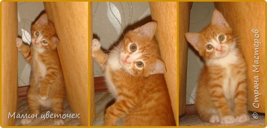 Всем привет!Недавно я писала о своем котике Рыжике. Сегодняшняя запись в блоге о том, как наш котик у нас прижился. фото 3