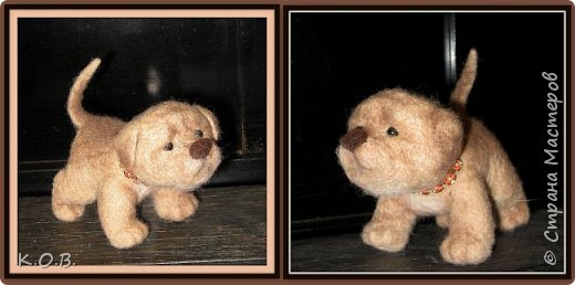 щенок фото 4