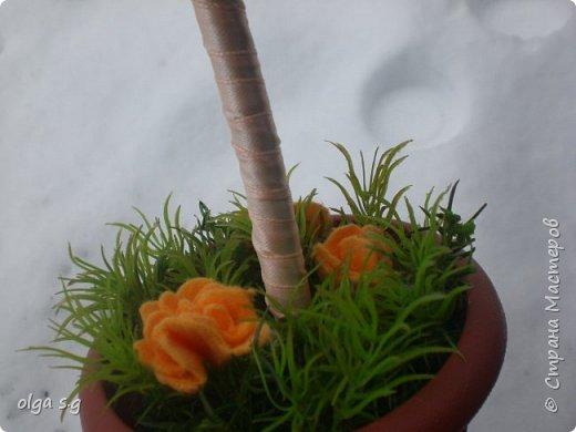 Апельсинка  фото 3
