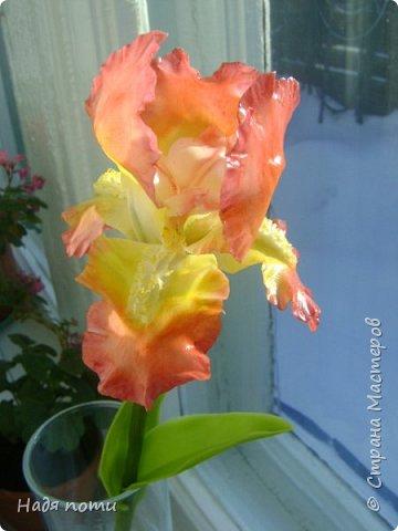 Захотелось слепить такие цветочки.Серединки конечно ярковаты,но в картинках нашла и такие. фото 7