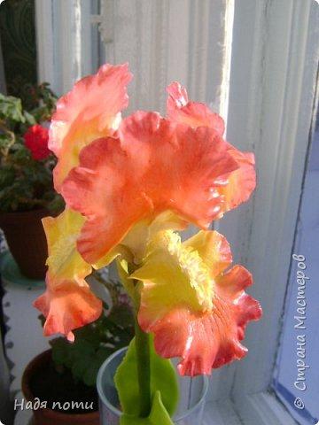 Захотелось слепить такие цветочки.Серединки конечно ярковаты,но в картинках нашла и такие. фото 6
