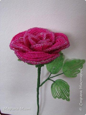 Мастер-класс Бисероплетение Мои прекрасные розы Бисер фото 31