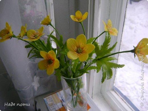 Смотрела картинки на Яндекс и нашла вот такие полевые цветочки. фото 2