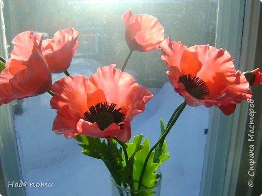 Смотрела картинки на Яндекс и нашла вот такие полевые цветочки. фото 8