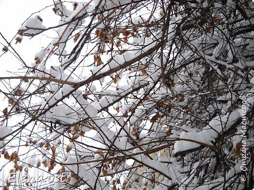 Зима радует в этом году. Мороз, пушистый белый снег... И мы с супругом непременно спешим запечатлеть мою очередную вязаную вещь на фоне зимней природы. Туника связана из пряжи Alize Cashmira - 600 г, спицы № 3.  фото 6