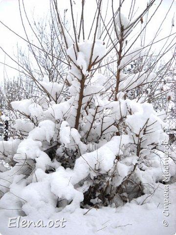 Зима радует в этом году. Мороз, пушистый белый снег... И мы с супругом непременно спешим запечатлеть мою очередную вязаную вещь на фоне зимней природы. Туника связана из пряжи Alize Cashmira - 600 г, спицы № 3.  фото 7