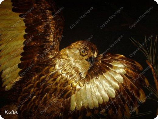 БЕРКУТ —хищная птица семейства ястребиных. Символ героизма, отваги, силы и власти.   фото 2