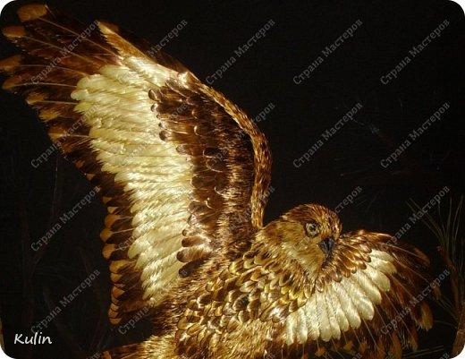 БЕРКУТ —хищная птица семейства ястребиных. Символ героизма, отваги, силы и власти.   фото 3
