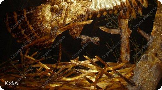 БЕРКУТ —хищная птица семейства ястребиных. Символ героизма, отваги, силы и власти.   фото 4