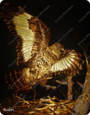 БЕРКУТ —хищная птица семейства ястребиных. Символ героизма, отваги, силы и власти.   фото 1