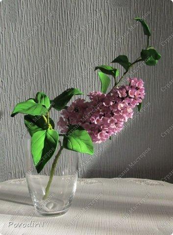 Сирень! Мое любимое весеннее растение! Как давно мне хотелось сделать ее.Но лепить ее из холодного фарфора или из соленого теста я не решалась. А из фоамирана попробовала. В прцессе подготовки нашла два сайта: здесь о сборке http://www.handworker.ru/interyter/iskusstvennye_cvety_siren/  , а здесь шаблоны цветов  http://kk.convdocs.org/docs/index-188823.html фото 27
