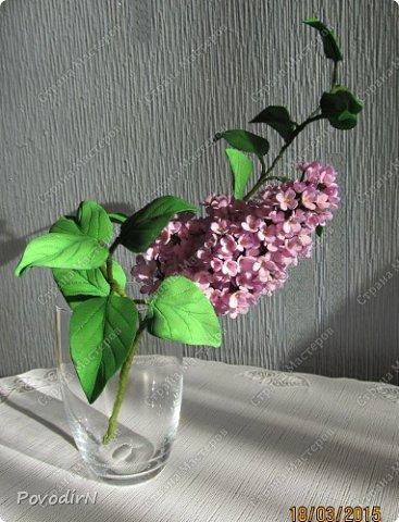 Сирень! Мое любимое весеннее растение! Как давно мне хотелось сделать ее.Но лепить ее из холодного фарфора или из соленого теста я не решалась. А из фоамирана попробовала. В прцессе подготовки нашла два сайта: здесь о сборке http://www.handworker.ru/interyter/iskusstvennye_cvety_siren/  , а здесь шаблоны цветов  http://kk.convdocs.org/docs/index-188823.html фото 28