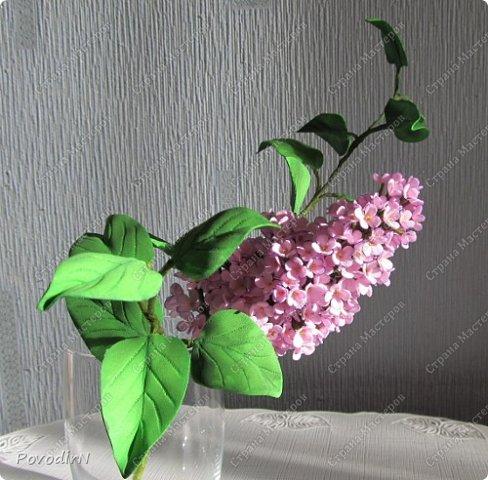 Сирень! Мое любимое весеннее растение! Как давно мне хотелось сделать ее.Но лепить ее из холодного фарфора или из соленого теста я не решалась. А из фоамирана попробовала. В прцессе подготовки нашла два сайта: здесь о сборке http://www.handworker.ru/interyter/iskusstvennye_cvety_siren/  , а здесь шаблоны цветов  http://kk.convdocs.org/docs/index-188823.html фото 1