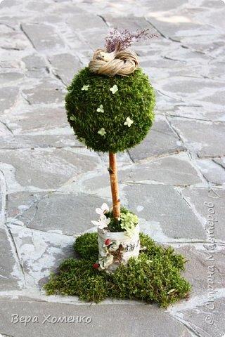 Пришла весна,хочется ей немного помочь,сделать зеленый дом для птичьего гнездышка.   фото 13